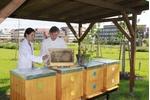 Včelnice v dendrologické zahradě bC
