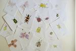 kresby hmyzu kresby hmyzu