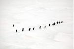 Čtvrtý den plavby expedice viděla tučňáky...