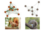The network visualization of the behavior of red (left) and eastern grey (right) squirrels assessed by YouTube videos  The network visualization of the behavior of red (left) and eastern grey (right) squirrels assessed by YouTube videos [Jagiello et al. 2019. Ecol Inform 51:52-60]; (Photo credits: Evas-naturfotografie, BirdPhotos).