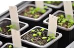 Experimental plants Experimental plants