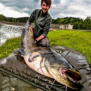 European catfish drives the freshwater ecosystems