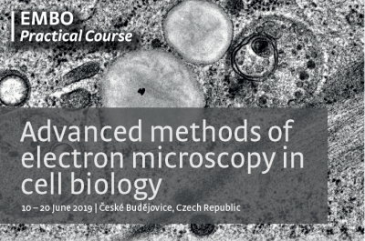 Advanced methods of electron microscopy in cell biology