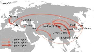Silk Road: not only goods, but also plant viruses