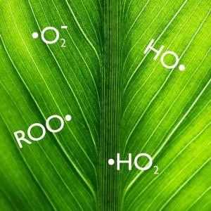 Volné kyslíkové radikály pomáhají rostlinám bojovat s chorobami